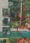 Uma Kuyang : la maison de l'orang-outan
